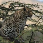 lobo valley norte serengeti 4
