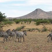 lobo valley norte serengeti 5