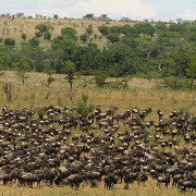 lobo valley norte serengeti 6