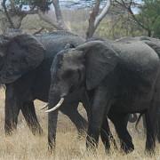 lobo valley norte serengeti 7