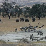 lobo valley norte serengeti 9