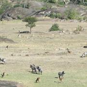 lobo valley norte serengeti 11