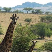 lobo valley norte serengeti 14