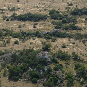 lobo valley norte serengeti 16