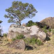lobo valley norte serengeti 18