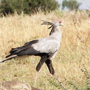 lobo valley norte serengeti 20