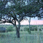 lemala mara river camp 27