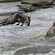 lemala mara river camp 32
