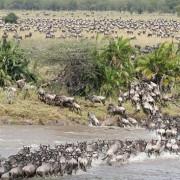 lemala mara river camp 33