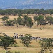 lemala mara river camp 41