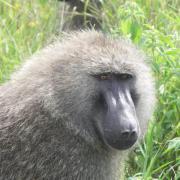 Serengeti Soroi Tented Lodge 1