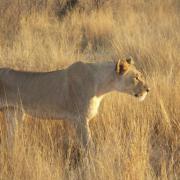 Serengeti Soroi Tented Lodge 25