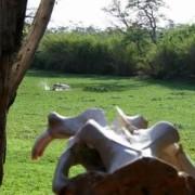 grumeti river tented lodge 11