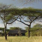 ikoma bush camp 2