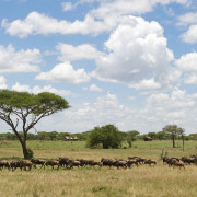 ikoma bush camp 11