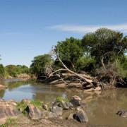 ikoma bush camp 14