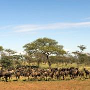 ikoma bush camp 15