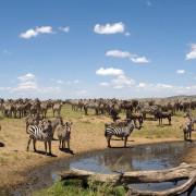 ikoma bush camp 16