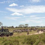 ikoma bush camp 18