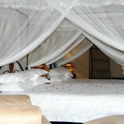 Serengeti Tanzania Bush Camp 7