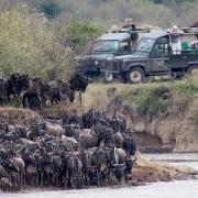 Cruce del río Mara en Maasai Mara