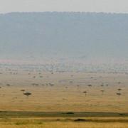Reserva de Masai Mara3
