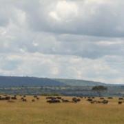 Reserva de Masai Mara4