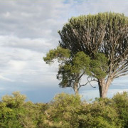 Reserva de Masai Mara5