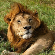 Reserva de Masai Mara7