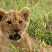 Reserva de Masai Mara13