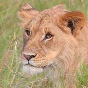 Reserva de Masai Mara18
