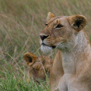 Reserva de Masai Mara19