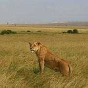Reserva de Masai Mara20
