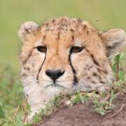 Reserva de Masai Mara21