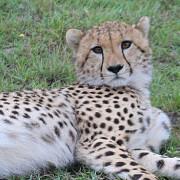 Reserva de Masai Mara25