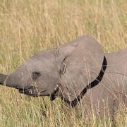 Reserva de Masai Mara31