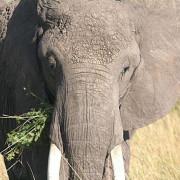 Reserva de Masai Mara32