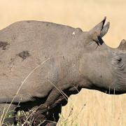 Reserva de Masai Mara36
