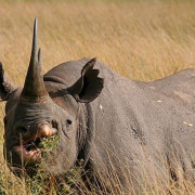Reserva de Masai Mara37