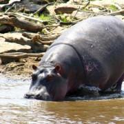 Reserva de Masai Mara41