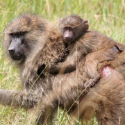 Reserva de Masai Mara45