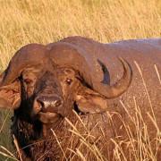 Reserva de Masai Mara48