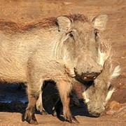 Reserva de Masai Mara49
