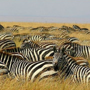 Reserva de Masai Mara51