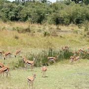 Reserva de Masai Mara59