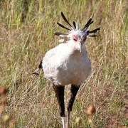Reserva de Masai Mara62