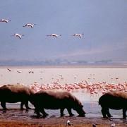 parque nacional amboseli4