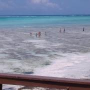 Mnarani Beach Cottages13