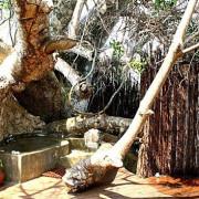 Fumba Beach Lodge15